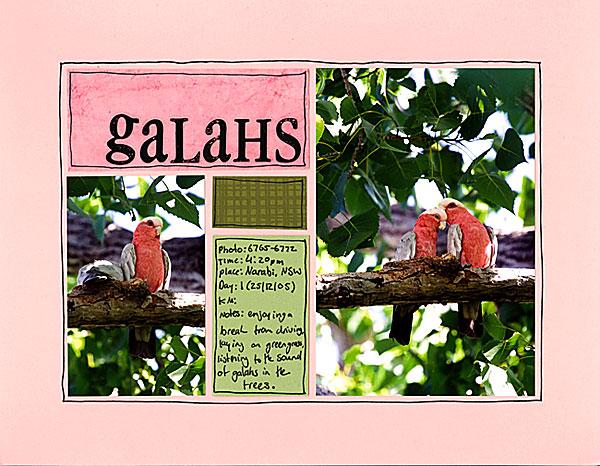 Galahs
