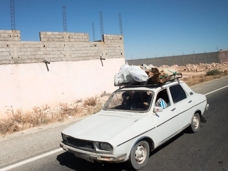goats and sheep on the roof rack of a white car